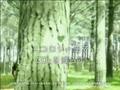 Kirin green label 17