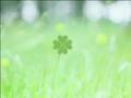 Kirin green label 27