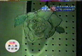 Vlcsnap-2010-05-26-19h27m12s174